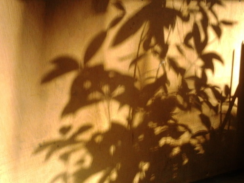 plant shadows on wood